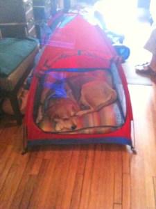 Lucas in his tent