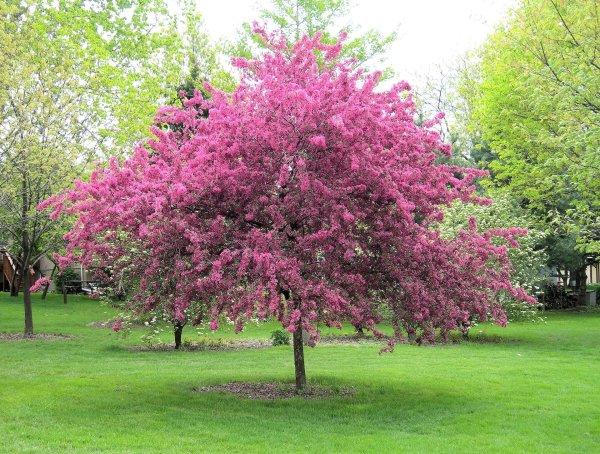 flowering & ornamental trees