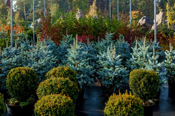 trees & shrubs colorado landscaping