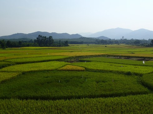 They grow rice in Vietnam? Who knew?