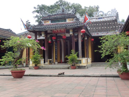A mangy cat guarding the Buddhist temple in Hoi An.