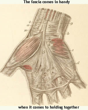 fascia