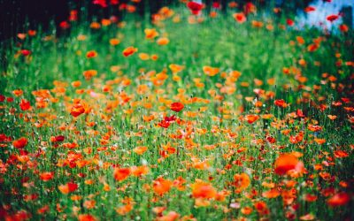 A grateful day meditation (by Brother David Steindl-Rast).