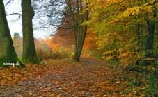Der Herbst, der Herbst