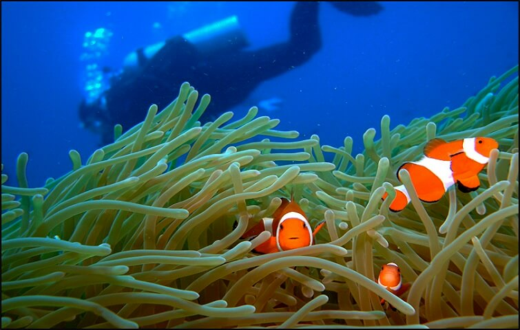 Nemo spotted while diving