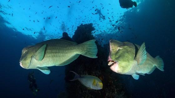 Tulamben surpising underwater photography