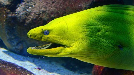 Diving Pemuteran Moray Eel
