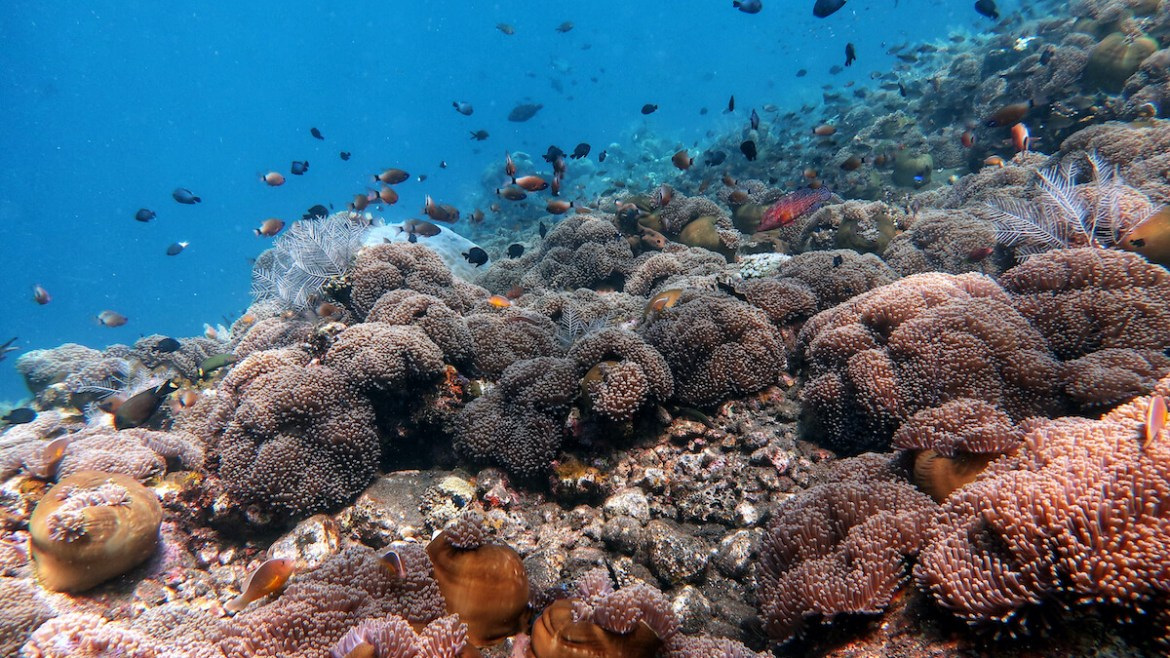 Scuba Diving Package Bali Discovery Tulamben