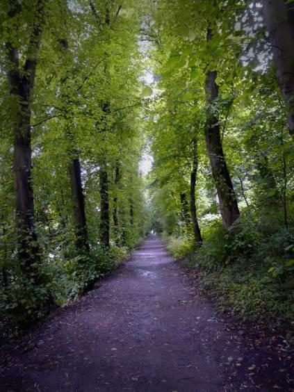 Image: Dark Forest Road