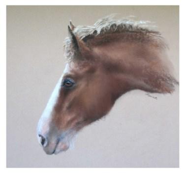 Heavy Horse Foal