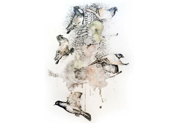 Evolution of Pigeon