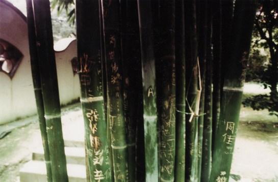 Changsha, les bambous