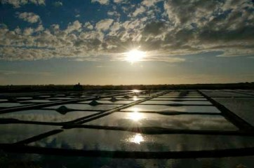 Noirmoutier, les marais salants