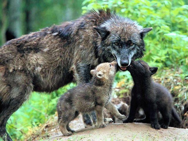 106-bebes-animaux-hyper-craquants-qui-vous-feront-fondre-de-tendresse103