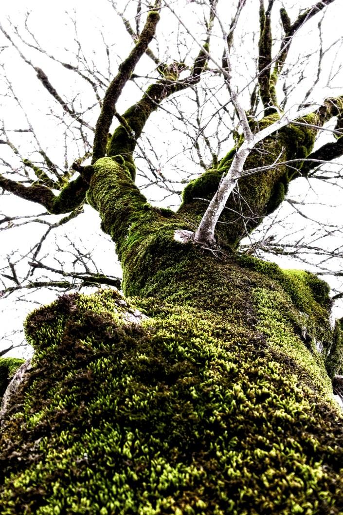 fine art fotografie - bäume und rinden