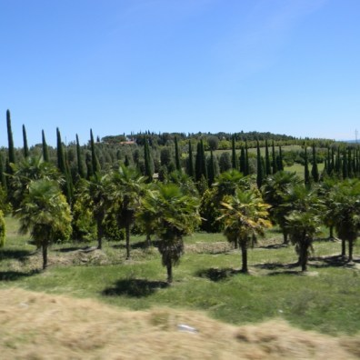 one of many tree farms in Umbria