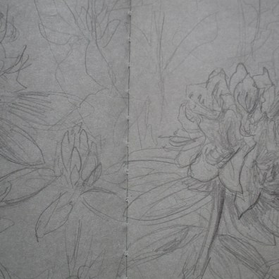 rhododendron (pencil)