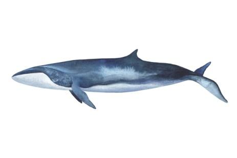 whale_09_web