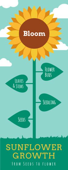 canva-seed-to-flower-timeline-infographic-MAB00MopFr0