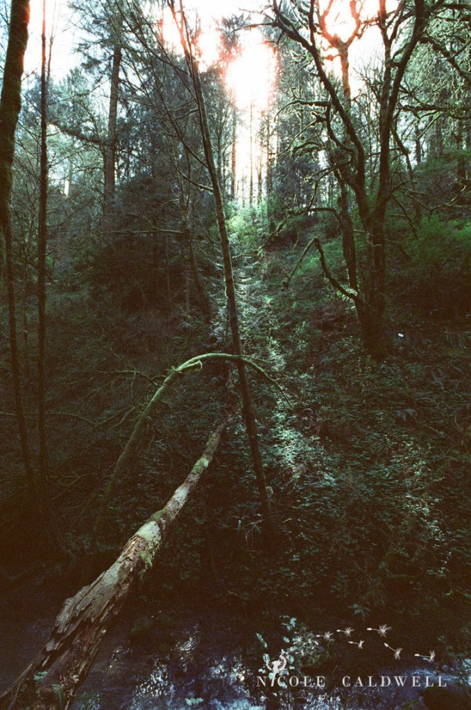 cinestill_film_forest_park_portland06