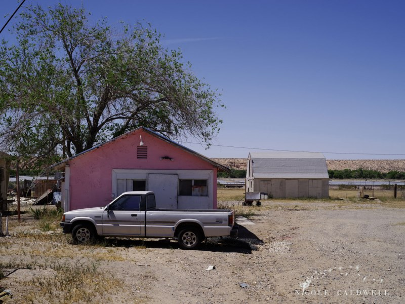 pentax-645z-at-Elmers-Bottle-Tree-Ranch-route-66-06