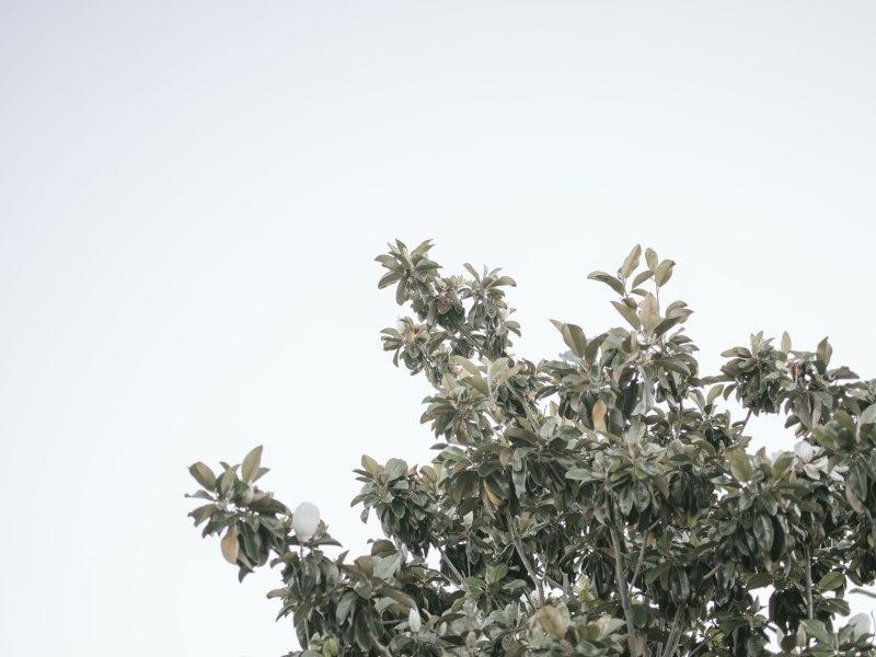pentax-645z-magnolia_nicole-Caldwell_209