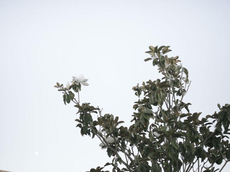 pentax-645z-magnolia_nicole-Caldwell_217
