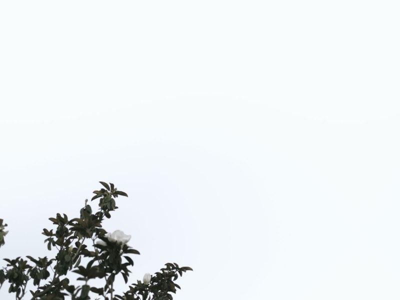 pentax-645z-magnolia_nicole-Caldwell_223