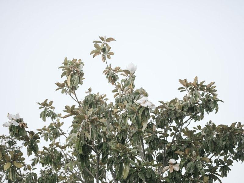 pentax-645z-magnolia_nicole-Caldwell_227