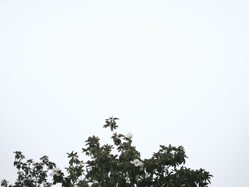pentax-645z-magnolia_nicole-Caldwell_236