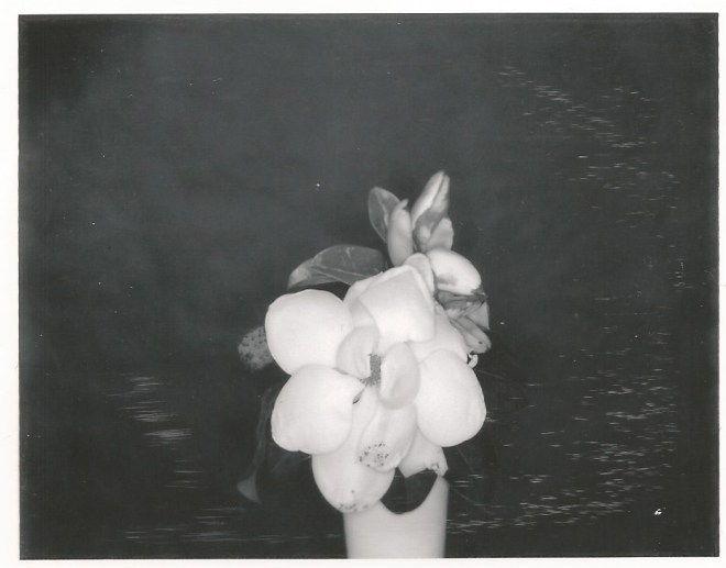type 55 nicole caldwell polaroid limted editions
