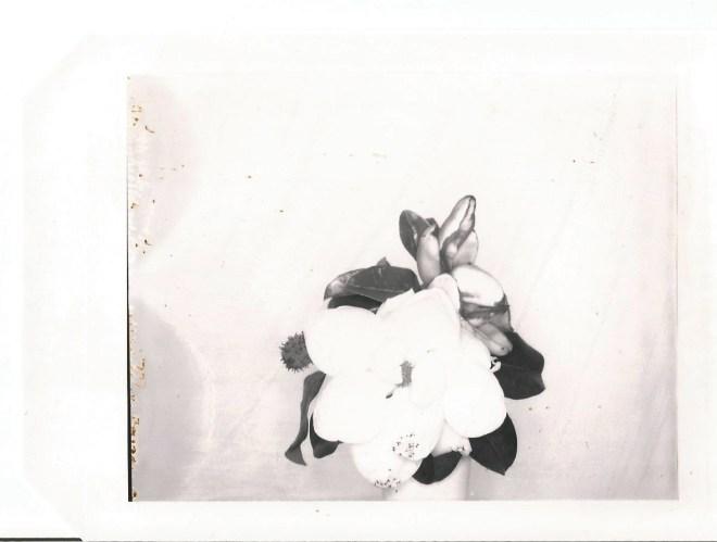 type 55 nicole caldwell polaroids magnolia