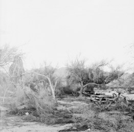 desert center ca film photo by nicole caldwell 23