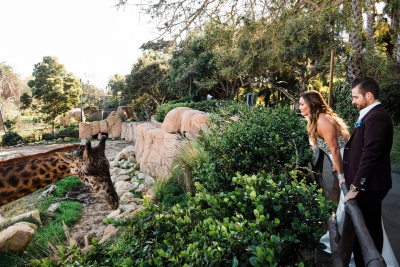 santa barabar zoo wedding and engagement pictures by nicole caldwell 39