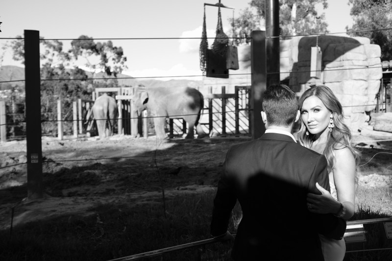 santa barabar zoo wedding and engagement pictures by nicole caldwell 48