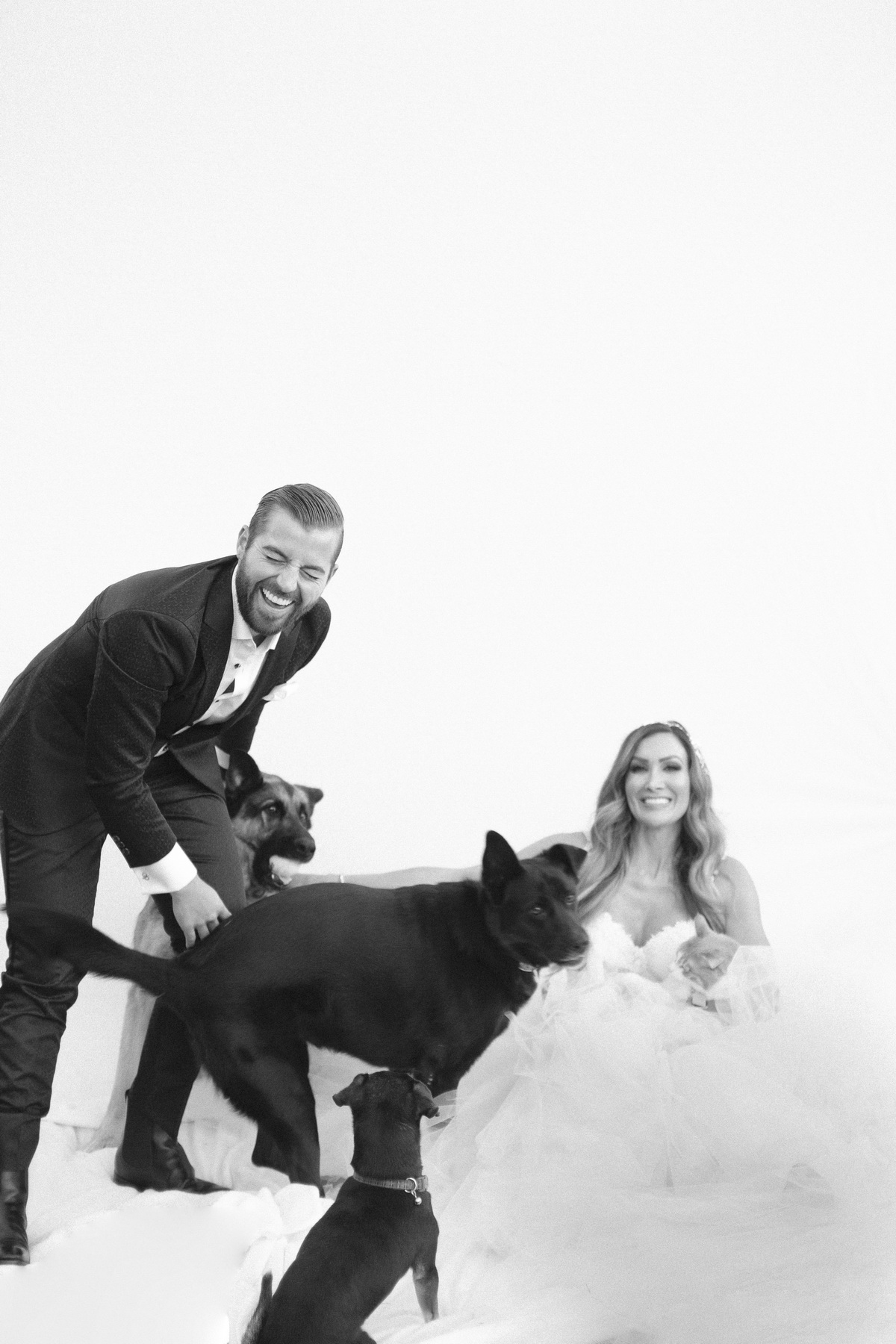 A bride, groom, 3 dogs and a Cat named Puppy