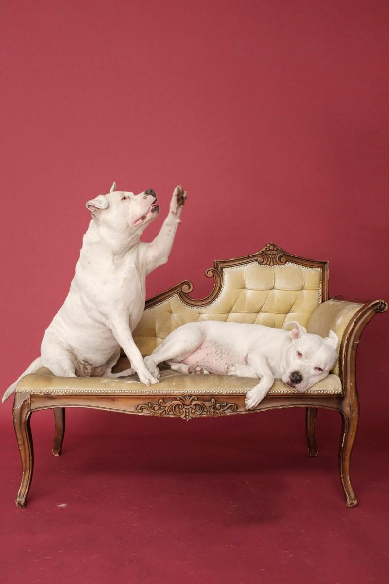 dog pet photographer nicole caldwell 05