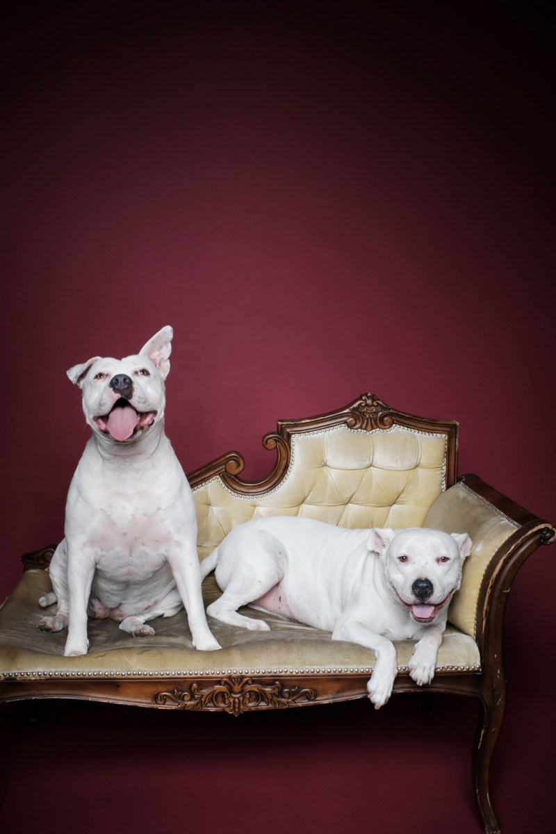 dog pet photographer nicole caldwell 08