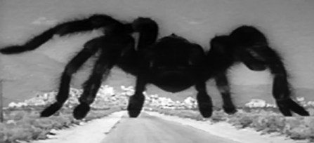 Tarantula1955_h493
