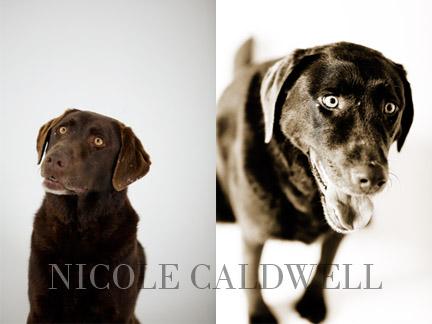 dog_portraits_by_nicole_cadlwell_leroy_04.jpg