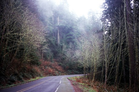 Oregon Coast Fog