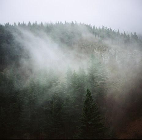 Oregon Mists