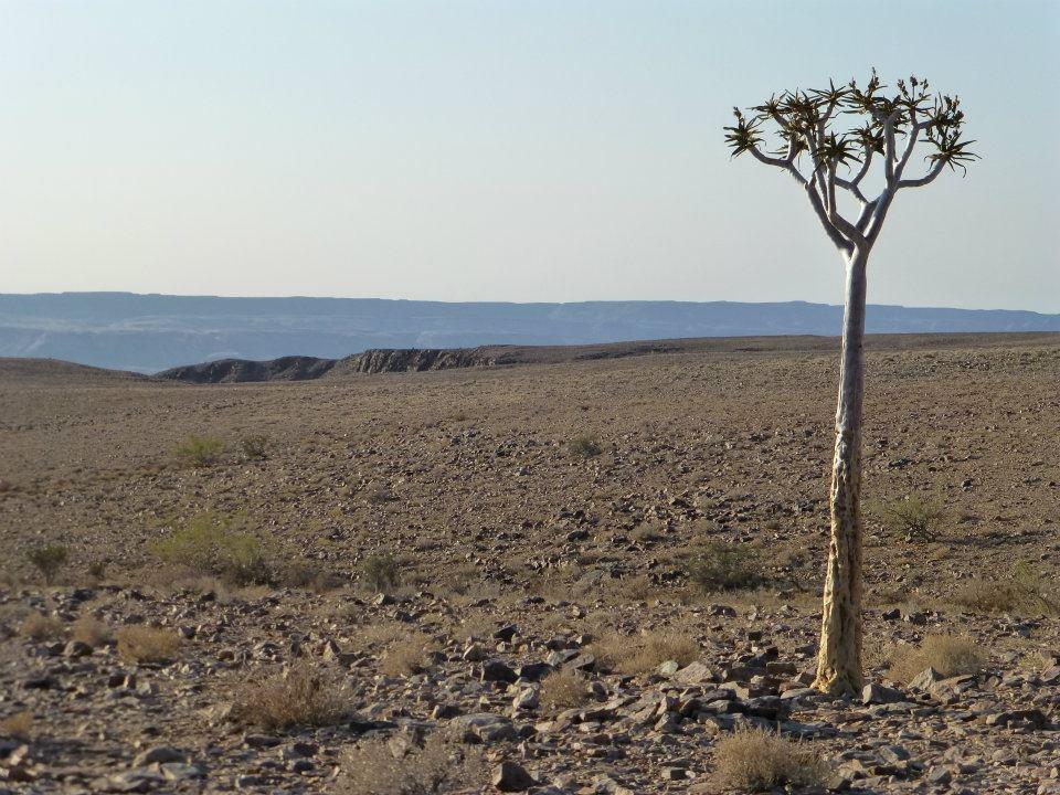 quiver-tree-namibia