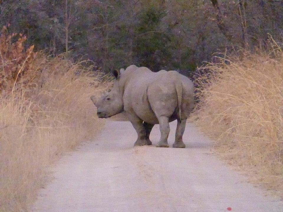 rhino-matopas-zimbabwe