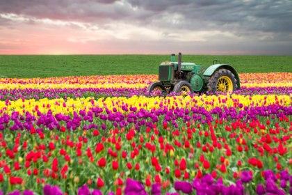 tulips-3229-Edit