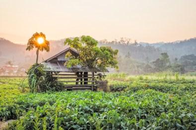 Sunrise in Thailand. (© Nicole S. Young — nicolesy.com)