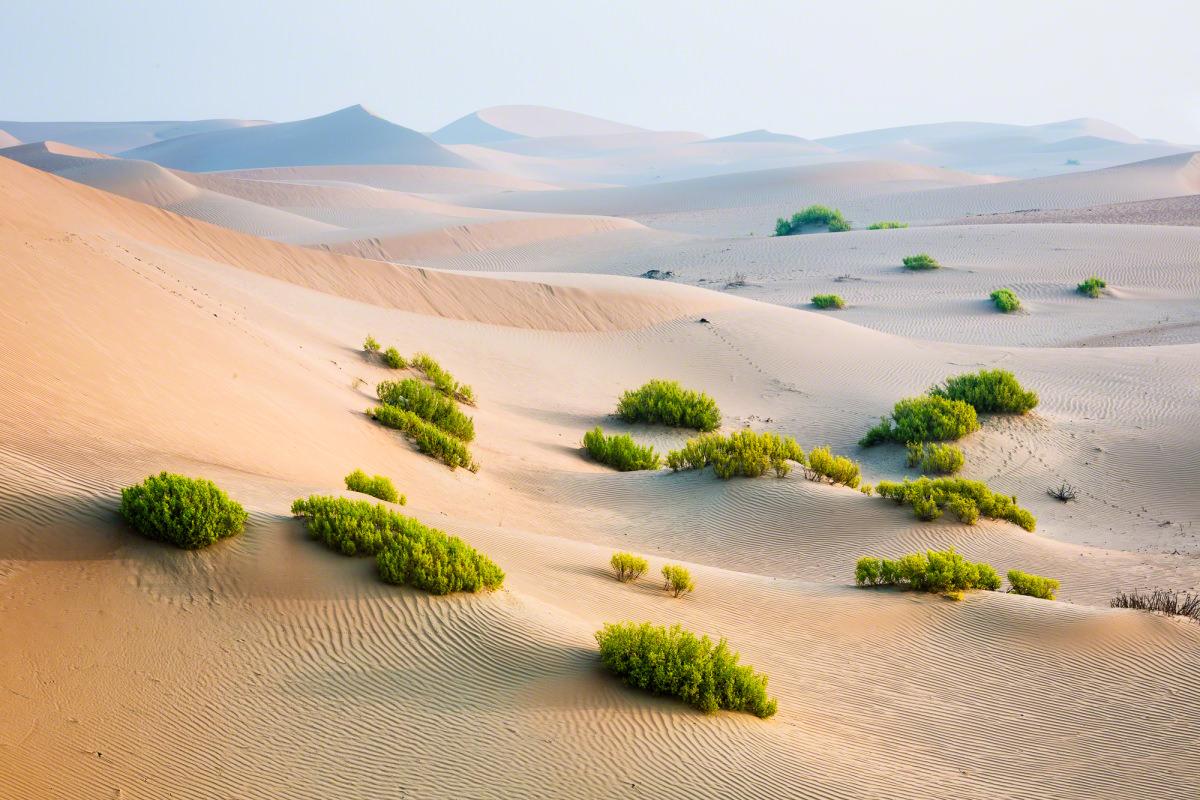 Abu Dhabi Desert