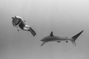 A silky shark in the Socorro Islands, Mexico