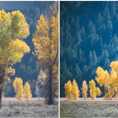 Free Lightroom Preset: Autumn Fresh