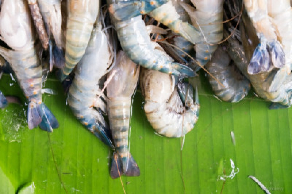 Shrimp in a Thai Market